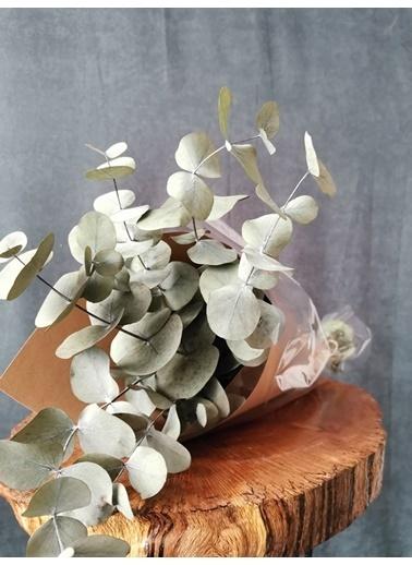 Kuru Çiçek Deposu Kuru Çiçek Şoklanmış Okaliptus Demeti Karışık Renk (50 Cm) Yeşil